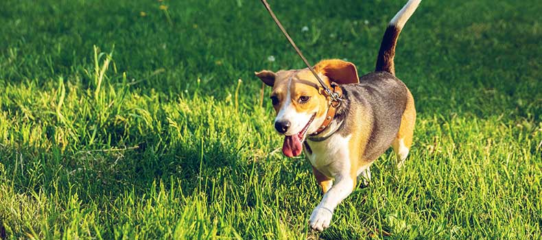 Hondenuitlaatdienst Pelt Kwispelheide