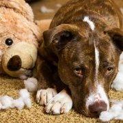 Ongewenst gedrag bij honden afleren Pelt Kwispelheide