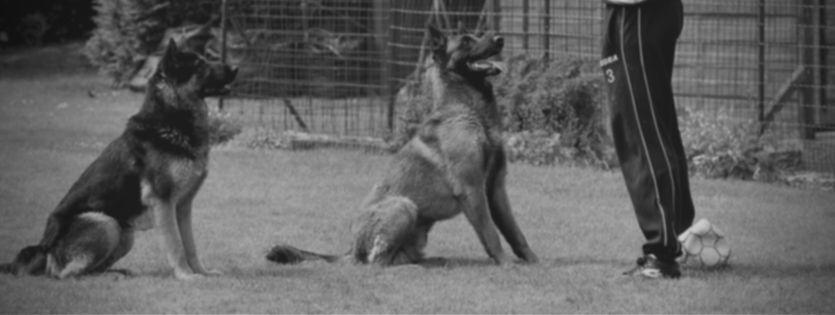 Nieuw gedragscentrum voor honden te Pelt