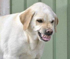 Gedragsprobleem hond