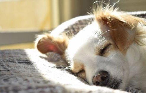 Heeft je hond het ook moeilijk tijdens de Coronacrisis