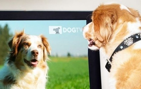 Wat als uw hond tekeer gaat naar TV