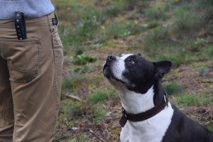 Hondenopleidingen